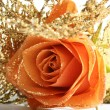 Orange rose — Stock Photo #12227715