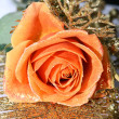 Orange rose — Stock Photo #12227718