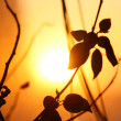Stock Photo: Leaf sunset