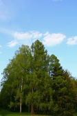 Spring nature landscape — Stock Photo