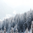 Forest in snow — Lizenzfreies Foto