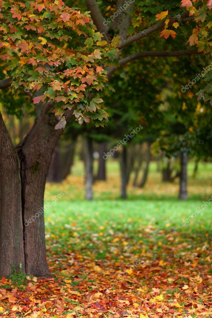 Close up autumn trees in park — Stock Photo #12314774