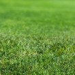 Beautiful green grass texture — Stock Photo #12361762