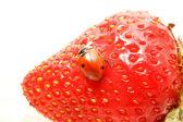 Ladybug gourmet — Stock Photo