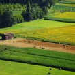 France green field panorama — Stock Photo