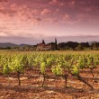 vignoble en france sur le lever du soleil — Photo