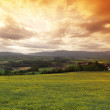 Green meadow under sunset sky with clouds — Stock Photo #13729789