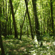 Summer forest with sunlight - Stock Photo