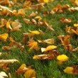 Leaves on grass - Foto Stock