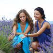 Two women on lavender field - Stock Photo
