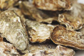 Oysters background — Stock Photo