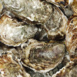 Oysters background - Stock Photo