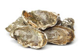 Oysters on white — Stock Photo