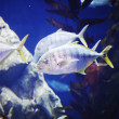 Tropical fish on a coral reef — Stock Photo #24951071