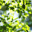 Green leaves background — Stock Photo #24951089