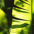 Palm tree leaf close-up - Stock Photo