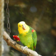 Stock Photo: Yellow-naped Amazon Parrot