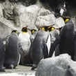 Emperor penguins — Stock Photo #24951135