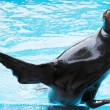 Sea lion — Stockfoto