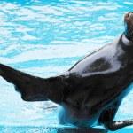 Sea lion — Stock Photo #24951181