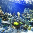 Tropical fish on a coral reef — Stock Photo #24951207