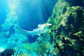 Hai unterwasser — Stockfoto