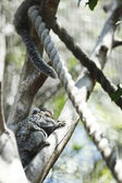 Koala on tree — Stock Photo