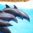 Dolphin show — Stock Photo #25317281