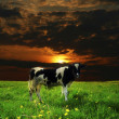 Cow sunset — Stock Photo #25594833
