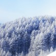 Forest in snow — Stockfoto