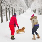 Vinter promenader — Stockfoto