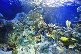 Peces tropicales de un arrecife de coral — Foto de Stock