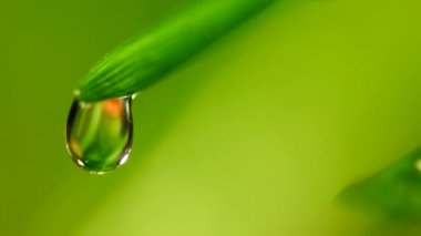Waterdrop falling from grass leaf closeup — Stock Video