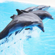 Dolphin show — Stock Photo #28606493