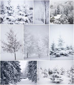 Collage of winter trees in smow — Stock Photo