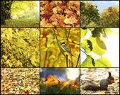 Autumn collage — Photo