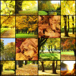 Collage of autumn landscapes — Stock Photo #29739619