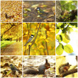 Collage of autumn backgrounds — Stock Photo