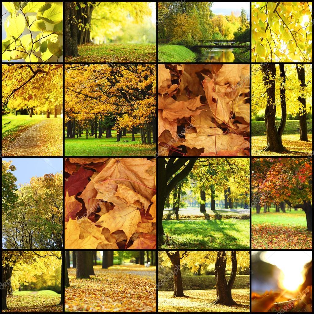 秋天风景的抽象拼贴画