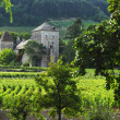 Vineyards in Gevrey Chambertin — Stock Photo