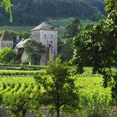 Vineyards in Gevrey Chambertin — Stock Photo