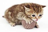 кошка и серый шар шерсти — Стоковое фото
