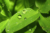 Waterdrops on plant — Stock Photo