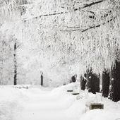 Winter trees — Стоковое фото