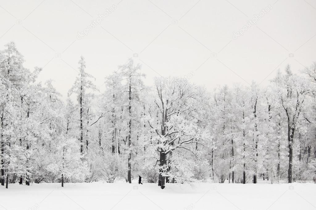 冬天树 — 图库照片08yellow2j#30400325