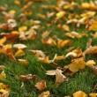 Leaves on grass — Stock fotografie