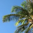 Palm tree in blue sky  — Stock Video