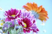 Barevné letní květiny — Stock fotografie