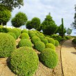 Boxwood in Amboise — Stock Photo
