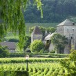 Stock Photo: Vineyards in Gevrey Chambertin